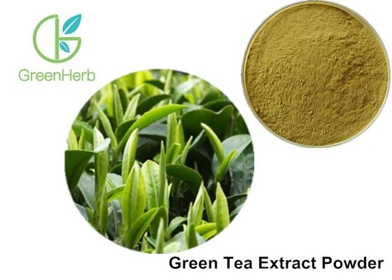 China Food Additives Green Tea Extract Powder 98% Polyphenols 80% Catechins supplier