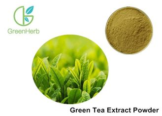 China Pure Natural Green Tea Extract Powder Tea Polyphenols / Catechin / EGCG supplier