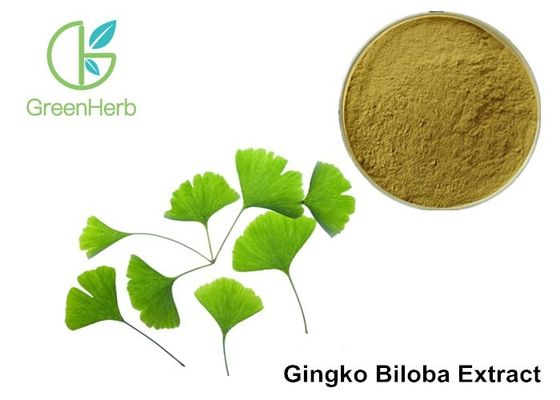 China Low Ginkgolic Acid Ginkgo Biloba Leaf Extract Powder For Dilate Blood Vessels supplier