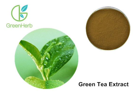 China Egcg Green Tea Extract Weight Loss 40%  EGCG Brown Yellow Powder supplier