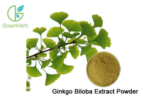 100% Natural Ginkgo Biloba Leaf Extract Powder Dilate Blood Vessels
