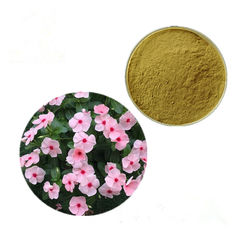 Increase Blood Flow Vinca Rosea Periwinkle Extract /Catharanthus Roseus Extract
