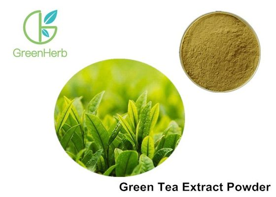 China Pure Natural Green Tea Extract Powder Tea Polyphenols / Catechin / EGCG factory