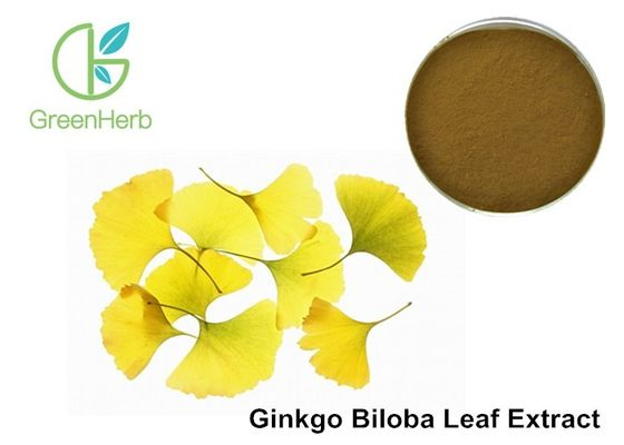 Low Density Ginkgo Biloba Blood Circulation 24% Flavone Glycosides Brown Powder