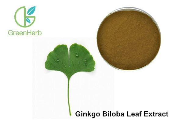 China 24% Flavone Glycosides Ginkgo Biloba Leaf Extract Powder For Pharmaceuticals factory