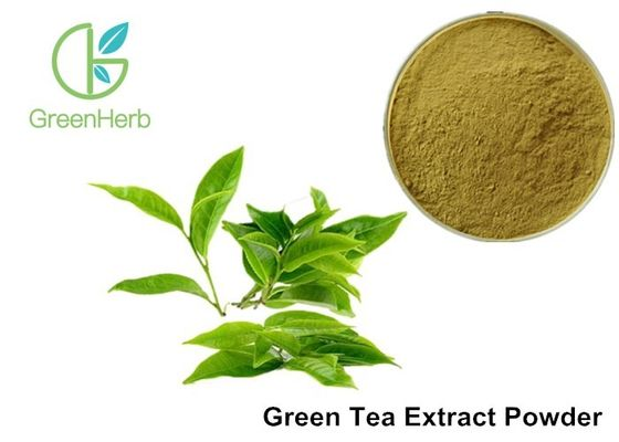 China Water Soluble Pure Green Tea Extract Camellia Sinensis Leaf Extract Anti - Caries Effect factory