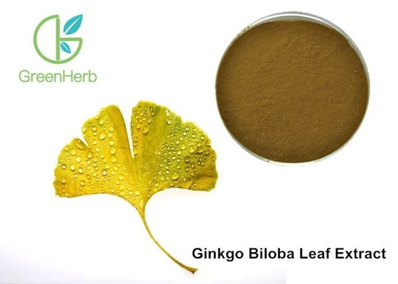 China Factory Supply Ginkgo Flavonoids , Terpene Lactones , Ginkgo Biloba Extract Powder factory