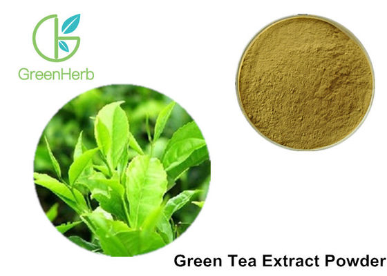 100% Pure Green Tea Extract Powder Anti - Bacteria For Cosmetics / Food