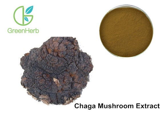 Chaga Mushroom Extract Phaeoporus Obliquus 30% Anti - Tumor Regulating