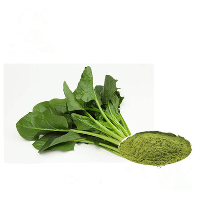 Green Fine Vegetable Extract Powder Spinach Leaf Extract 80 Mesh For Food Additives