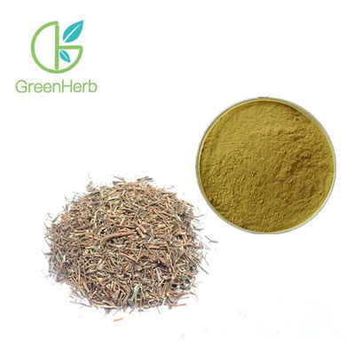 100% Natural Medicinal Plants Powder For Health Care Bupleurum Extract